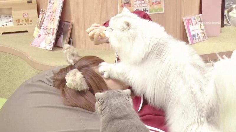 えなこが顔を猫に踏まれる3