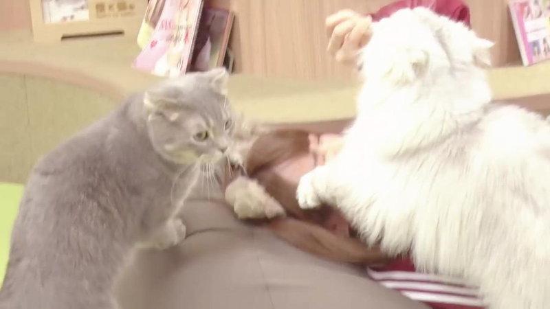 えなこが顔を猫に踏まれる6