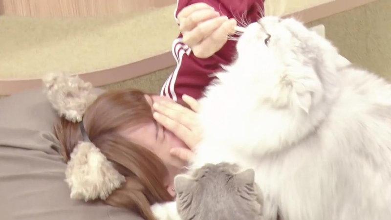 えなこが顔を猫に踏まれる8